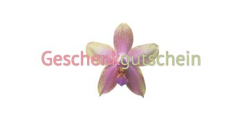 Geschenkgutscheinkarte Kosmetik Orchidee