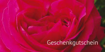 Geschenkgutscheinkarte Rote Rose