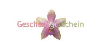 Geschenkgutschein Kosmetik Orchidee