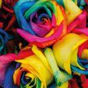 Valentinstag Rainbow